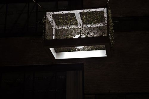 Hanging Streetlight Planters Appear in the Netherlands4